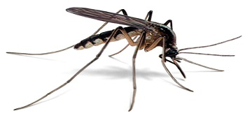 Department of Public Health West Nile Virus Fact Sheet